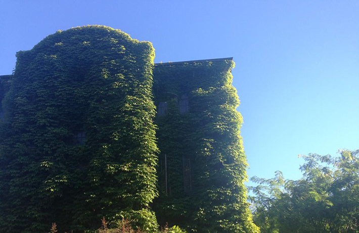 Building with vines