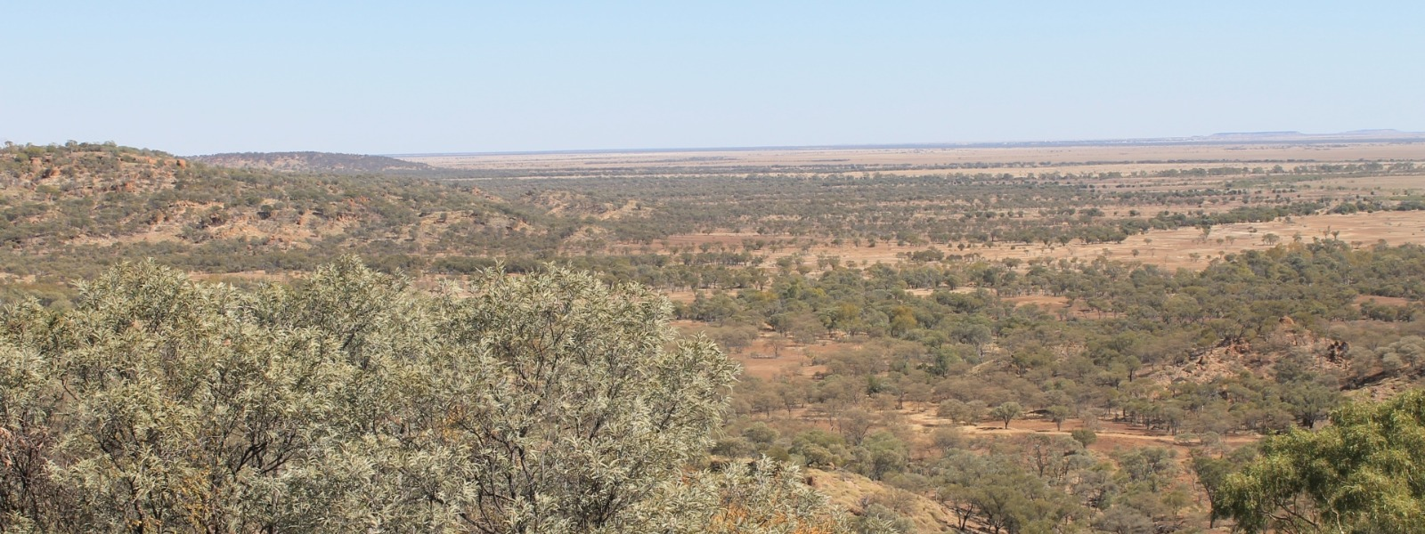 bush near winton, queensland